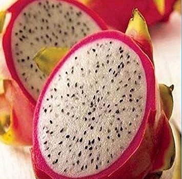 758996463a1a9 20 RARE Semillas Fruta del dragón de Pitaya Hylocereus undatus Frutas  Semillas Semillas caliente SH  Amazon.es  Jardín