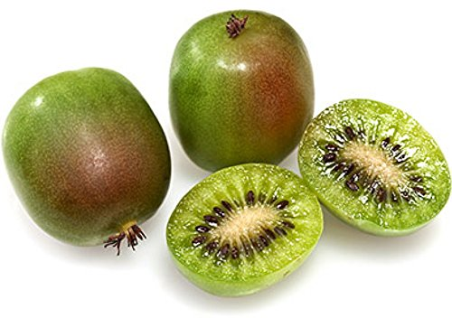 Hardy Kiwi Vine - 1