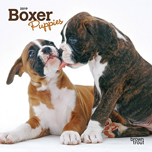 Boxers Puppies (Boxer Puppies 2019 7 x 7 Inch Monthly Mini Wall Calendar, Animals Dog Breeds Puppies (English, French and Spanish Edition))