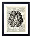 Human Brain Illustration (#2) Upcycled Dictionary Art Print Review and Comparison