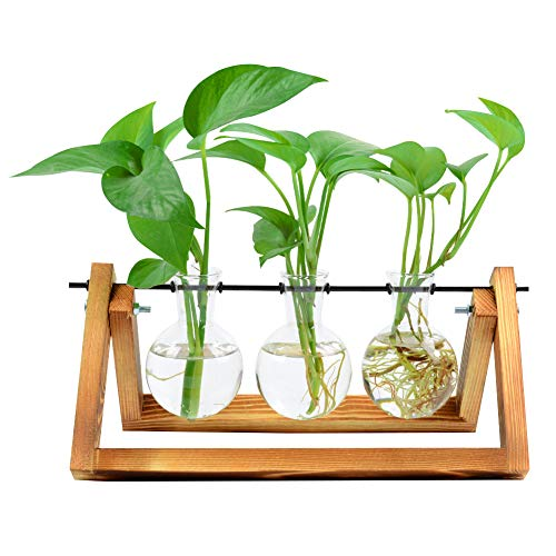 (Bulb Glass Planter Vase Terrarium Hydroponics Desktop Planter Vase Holder with Wooden Stand and Metal Swivel Holder for Home Garden Office Decoration - 3 Bulb Vase)