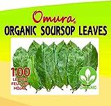ORGANIC OMURA SOURSOP GRAVIOLA 100 Leaves for Tea ANTIOXIDANT RICH