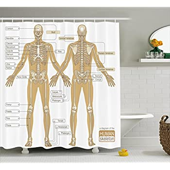Amazon ambesonne human anatomy shower curtain diagram of human ambesonne human anatomy shower curtain diagram of human skeleton system with titled main parts of ccuart Gallery