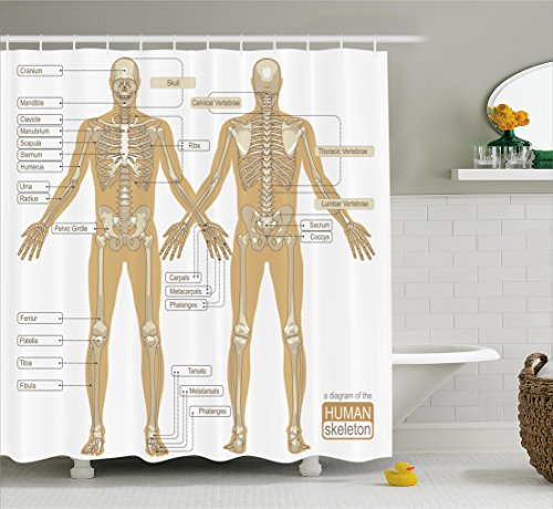 Human Anatomy Shower Curtain by Ambesonne, Diagram of Human Skeleton System with Titled Main Parts of Body Joints Picture, Fabric Bathroom Decor Set with Hooks, 70 Inches, White - Part Diagram