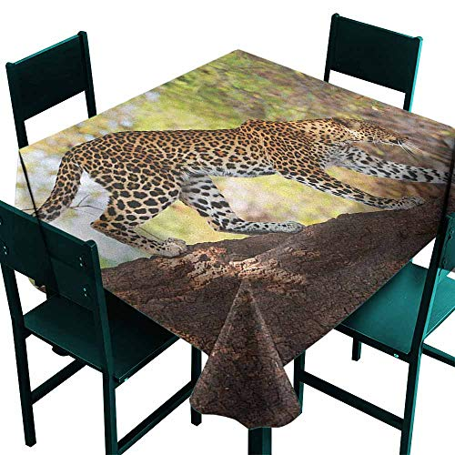 (Warm Family Zoo Wrinkle Resistant Tablecloth Leopard Panthera Pantus on Tree Nature Reserve Botswana Carnivore Animal for Kitchen Dinning Tabletop Decoration W60 x L60 Green Pale Brown White)