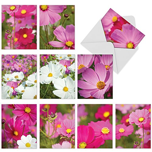 M6029 Cosmos-Politan: 10 Assorted Blank All-Occasion Note Cards Feature Graceful Pink and White Floral Blooms, w/White Envelopes.