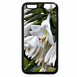 iPhone 6S / iPhone 6 Case (Black) cluster of white