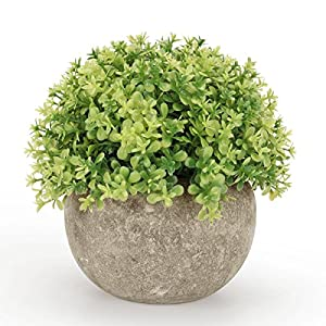 Kumii Small Artificial Topiary Plant in Pot, Baby's tears 5 Inch Decoration, Fake Potted Plant for Desk Office Living Room Decoration (Yellow)