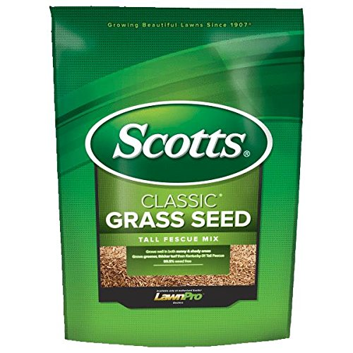 Kentucky 31 Fescue Seed - 6
