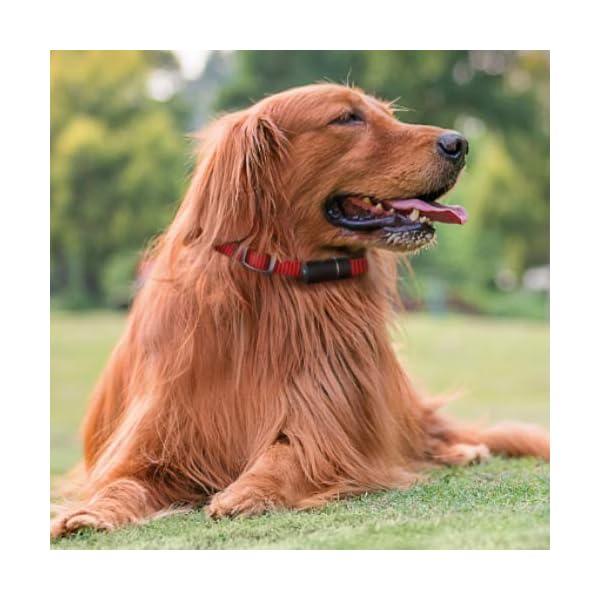 V-Pet Tracker by Vodafone, a POD 3 GPS Dog Tracker/GPS Animal Tracker/GPS Pet Tracker for Tracking Your Dogs 5