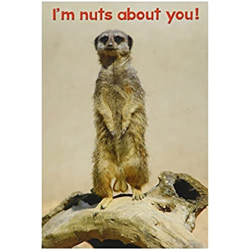 NobleWorks 7241 Nuts About You Funny Valentine's Day Unique Greeting Card, 5 x 7 Sales