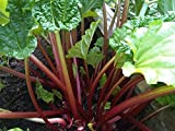 Rhubarb Seeds * Crimson Stalks * Withstands Hot Temps