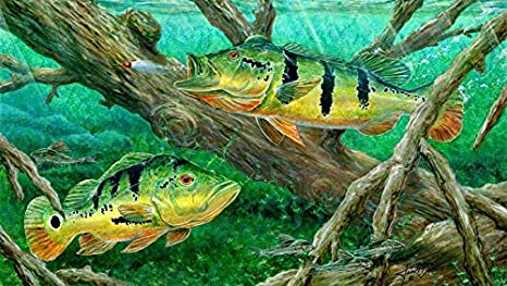 Buy Avikalp Exclusive Awi2898 Peacock Bass Fishing On Canvas Full Hd