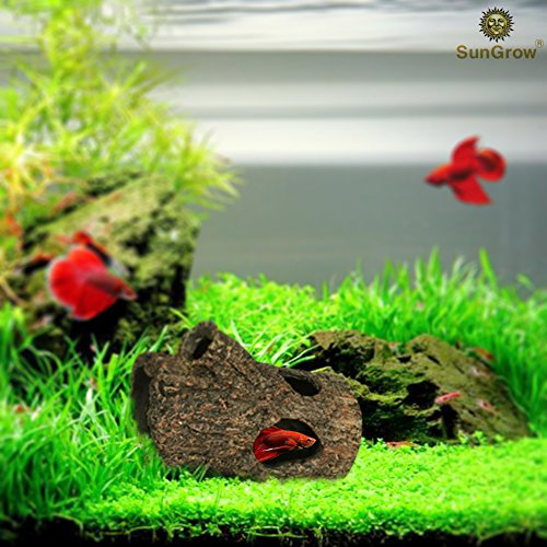 514XXSUm9xL - SunGrow Betta Log: Hollow log for fish to hide, play, sleep and breed: Natural look: Purifies water: Great for aquarium decoration with moss