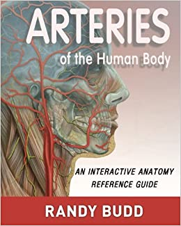 Arteries of the Human Body: An interactive anatomy reference
