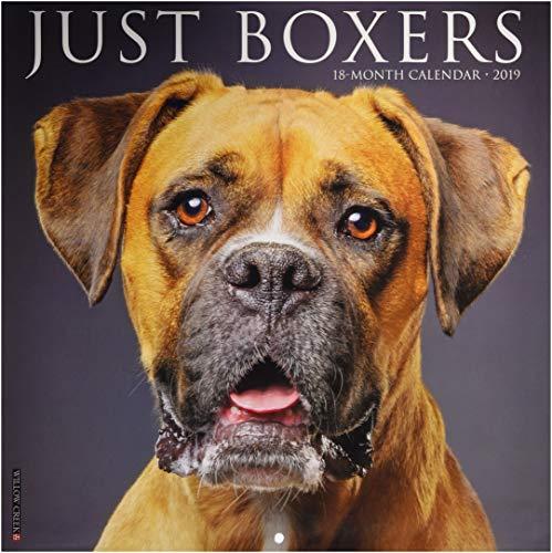 Just Boxers 2019 Wall Calendar (Dog Breed Calendar)