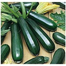 David's Garden Seeds Zucchini Black Beauty SL149QU (Green) 50 Heirloom Seeds