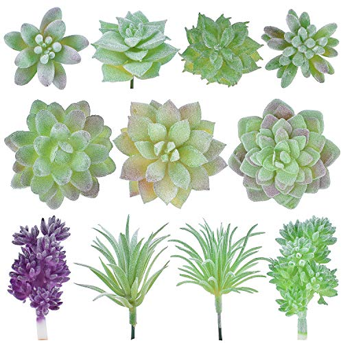 Top 10 Succulent Plants With Purple Flowers Of 2018 No