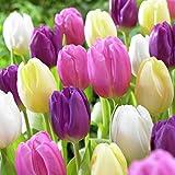 Van Zyverden Tulips Easter Basket Mixture Set of 15 bulbs