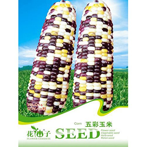 colorful-green-corn-seeds-garden-vegetable-plants-10pcs