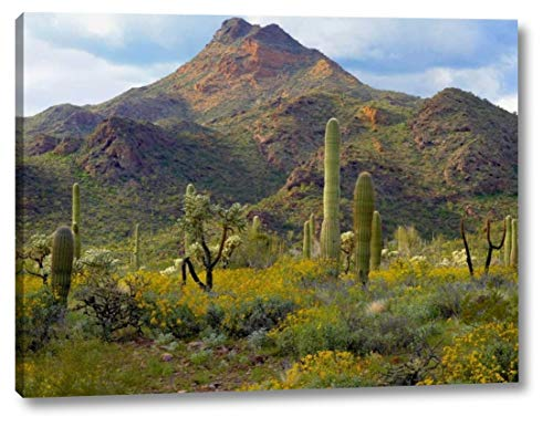 (Saguaro and Teddybear Cholla amid Flowering Lupine and California Brittlebush by Tim Fitzharris - 23