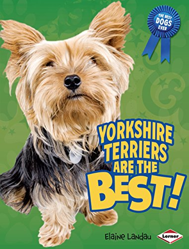 Yorkshire Terriers Are the Best! (The Best Dogs Ever)