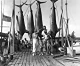 Ernest Hemingway Key West Bahamas 1935 Poster Photo Marlin Big Game Fishing Posters Photos 11x14