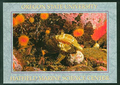Center Postcard - Grunt Sculpin Tidepool Aquarium Hatfield Marine Science Center Oregon State University Postcard
