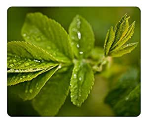 Fresh Green Leaves And Water Drops Mouse Pad - Durable Office Accessory Desktop Laptop MousePad and Gifts Gaming mouse pads by runtopwell