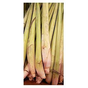Thai Fresh Lemongrass - 8 stalks
