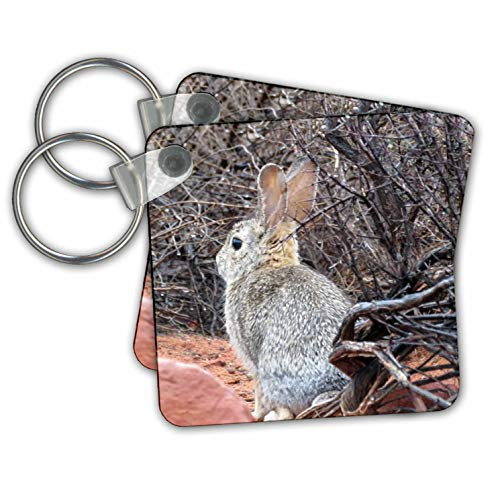 Jos Fauxtographee- Bunny Rabbit - A cute Jack Rabbit in Kayenta with ears standing up - Key Chains - set of 2 Key Chains (kc_293904_1)