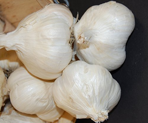 1 +Pound Fresh Music Garlic Bulbs - Hardneck