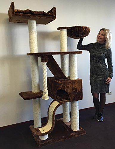 Cheap Cat Tree for Large Cats – Cat Mansion Brown – 71 inch 108 lbs 5 inch Ø poles – Total size 71x29x23 inch – Cat Scratcher scratching post activity center Cat Trees for large cats. Quality product from C