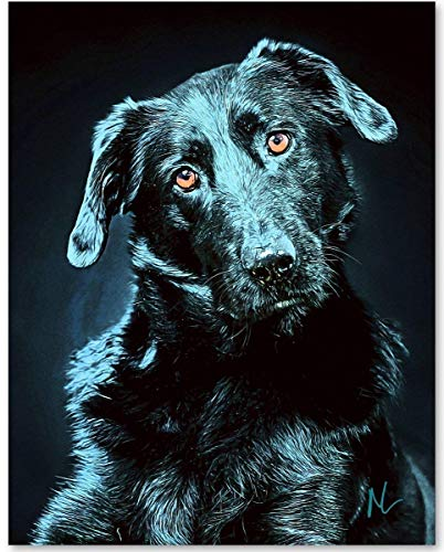 Blue Labrador Retriever Dog - 11x14 Unframed Art Print - Makes a Great Gift Under $15 for Dog Lovers ()