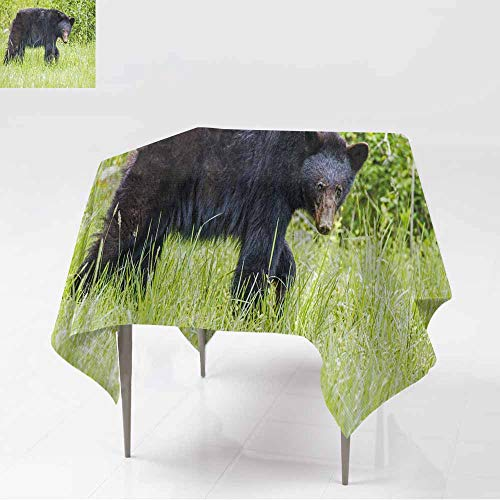 - AFGG Anti-Fading Tablecloths,Black Bear in Green Grass,for Events Party Restaurant Dining Table Cover,70x70 Inch