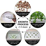 Homend Indoor Hydroponic Grow Kit with Bubble