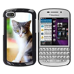 Super Stella Slim PC Hard Case Cover Skin Armor Shell Protection // M00146022 House Cat Cat Pet Pet Cat // BlackBerry Q10