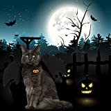 Legendog Cat Costume Halloween Bat Wings Pet Costumes Pet Apparel for Small Dogs and Cats