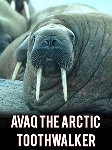 Avaq the Arctic Toothwalker