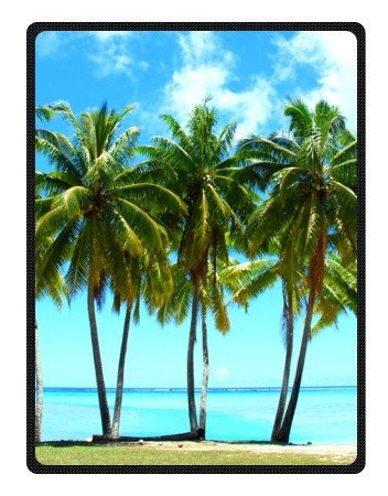 West Palm Palm Tree Soft Fleece Blankets 58 x 80 inches (Large) (Bordered Tree)