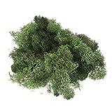 SUPVOX Preserved Fresh Moss Accessory Decor for Wedding Party Garden 50g Light Green