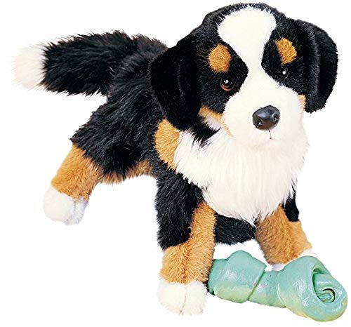 (Trevor Bernese Mountain Dog)