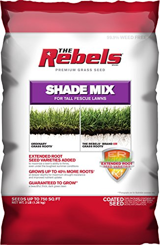 Tall Fescue Shade (Pennington Rebel Shade Tall Fescue Mix Powder Coated Seed, 3 lb.)