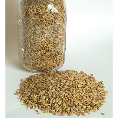 - David's Garden Seeds Grain Crop Barley Robust 2720 (Brown) Non-GMO, Organic One Ounce Package