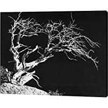 "Bodi Tree by Albert Koetsier - 14""x18"" Gallery Wrapped Giclee Canvas Art Print - Ready to Hang"