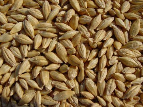 Joseph's Grainery Barley 12 Lbs, Unhulled Barley (Hull Intact), Whole Grain Barley, Non-GMO, Kosher Certified ()