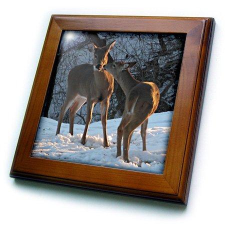 Framed Deer Tile - 3dRose ft_11527_1 Stealing A Kiss, Deer Kissing-Framed Tile, 8 by 8-Inch