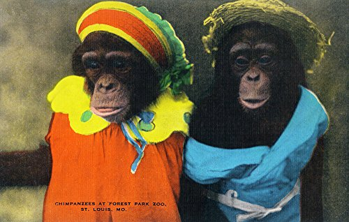 St. Louis, Missouri - Forest Park Zoo Chimpanzees in Costume (12x18 Signed Print Master Art Print w/Certificate of Authenticity - Wall Decor Travel -