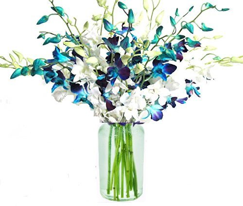 20 Blue and White Orchids with Vase by eflowerwholesale