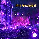 BrizLabs Purple Halloween Lights, 78.74ft 240 LED